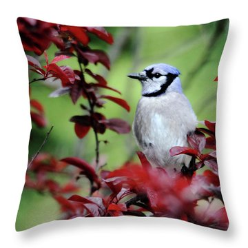 Blue Jay In The Plum Tree Throw Pillow
