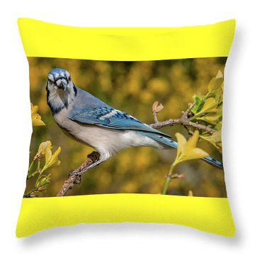 Blue Jay In Yellow Spring Throw Pillow