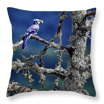 Blue Jay Mountain Throw Pillow