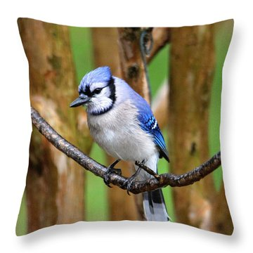 Blue Jay On A Branch Throw Pillow