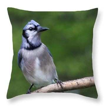 Blue Jay On Alert Throw Pillow