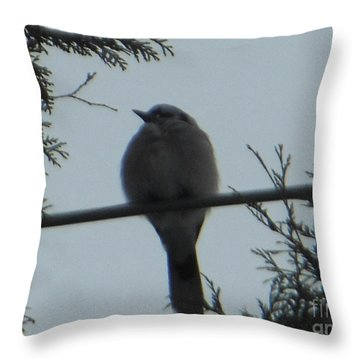 Blue Jay On Wire Throw Pillow