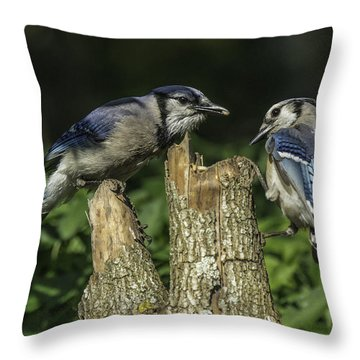 Blue Jay Pair Throw Pillow