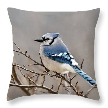 Blue Jay Way Throw Pillow by Lara Ellis