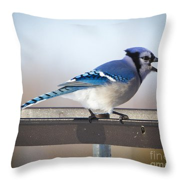 Blue Jay With A Mouth Full Throw Pillow