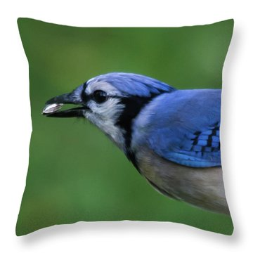 Blue Jay With Seed Throw Pillow
