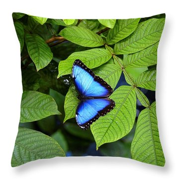 Blue Leaves - Morpho Butterfly Throw Pillow