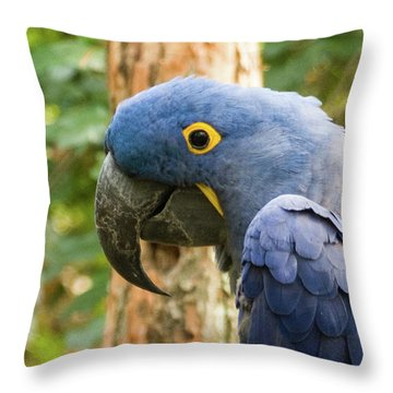 Blue Macaw Throw Pillow