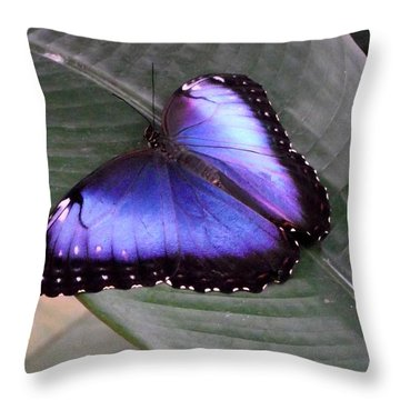 Blue Morph Throw Pillow by David and Lynn Keller
