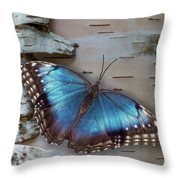 Blue Morpho Butterfly On White Birch Bark Throw Pillow by Patti Deters