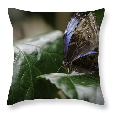 Throw Pillow featuring the photograph Blue Morpho On A Leaf by Jason Moynihan