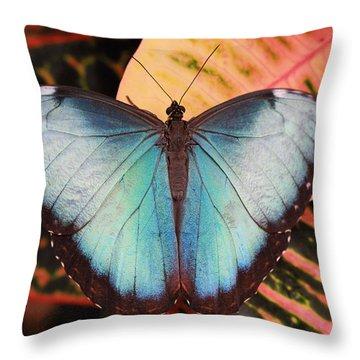 Blue Morpho On Orange Leaf Throw Pillow