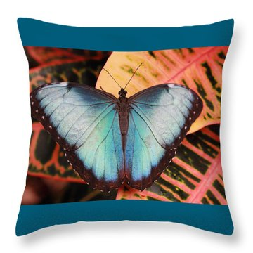 Blue Morpho On Orange Leaf Throw Pillow