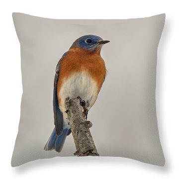 Blue On Gray Throw Pillow by Timothy McIntyre