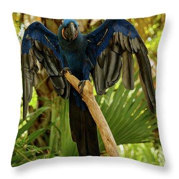Blue Parrot Throw Pillow