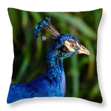 Blue Peacock Throw Pillow by Daniel Precht