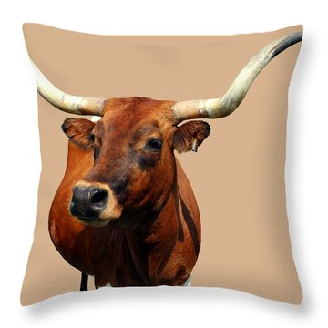 Throw Pillow featuring the photograph Blue Ribbon Pose by Betty Northcutt