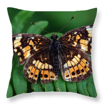 Blue Ridge Butterfly Throw Pillow