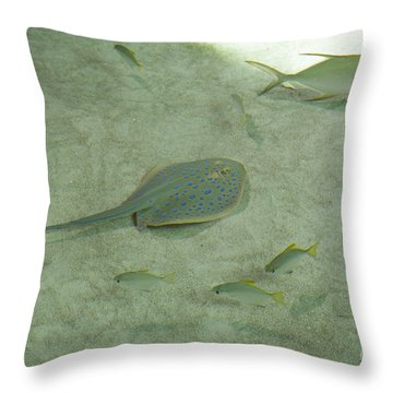 Throw Pillow featuring the photograph Blue Spotted Ray And Friends by Carol Lynn Coronios