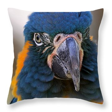 Blue-throated Macaw Close-up Throw Pillow