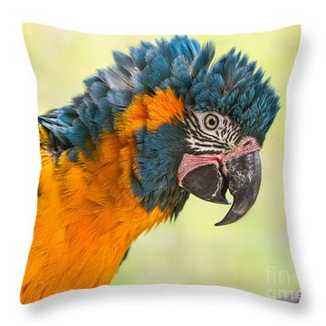 Blue Throated Macaw Throw Pillow