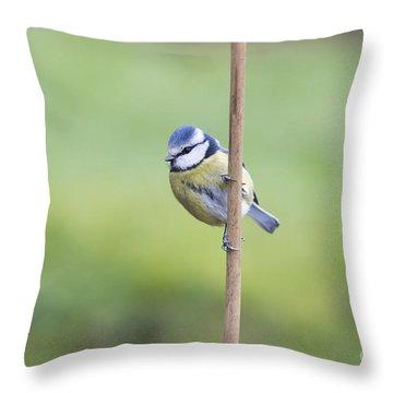 Blue Tit On A Garden Cane Throw Pillow