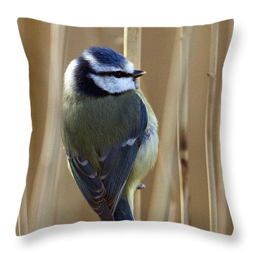 Blue Tit On Reed Throw Pillow
