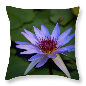 Blue Water Lily In Pond 2 Throw Pillow