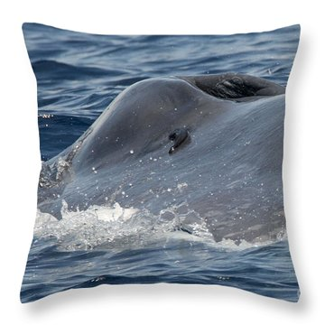 Blue Whale Head Throw Pillow by Loriannah Hespe
