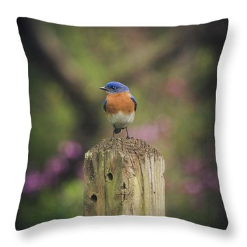Throw Pillow featuring the photograph Blue With A Bit Of Pink by Robert L Jackson