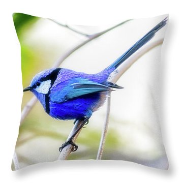 Blue Wren, Margaret River Throw Pillow by Dave Catley