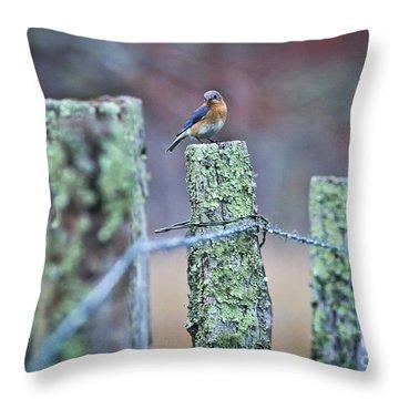 Bluebird 040517 Throw Pillow by Douglas Stucky