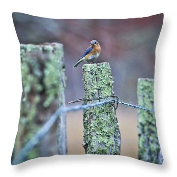 Throw Pillow featuring the photograph Bluebird 040517 by Douglas Stucky