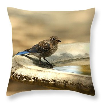 Throw Pillow featuring the photograph Bluebird Bath Time by Sheila Brown