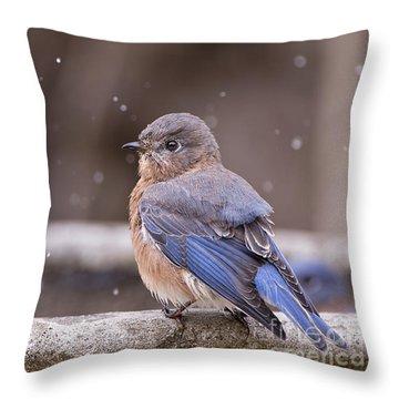 Bluebird Bubble Bath Throw Pillow by Bonnie Barry