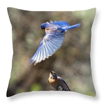 Bluebird Buzz Throw Pillow by Mike Dawson