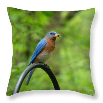 Bluebird Catches Worm Throw Pillow