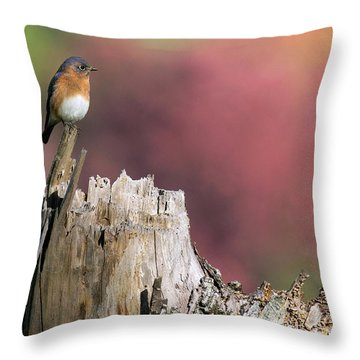 Bluebird Fall Perch Throw Pillow