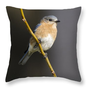 Bluebird Female Throw Pillow