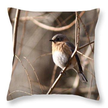 Bluebird In Beige Throw Pillow by Travis Truelove