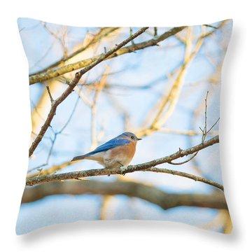 Bluebird In Tree Throw Pillow