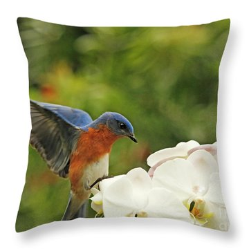 Bluebird Landing On Orchid Throw Pillow