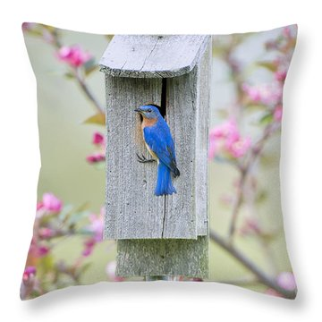 Bluebird Nesting Box Throw Pillow