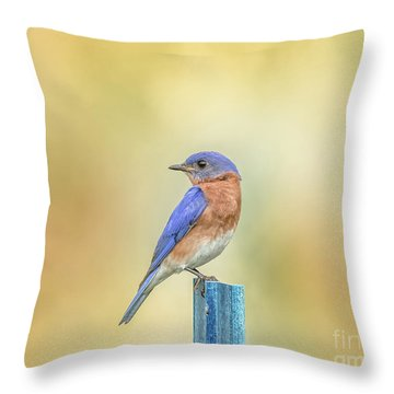 Throw Pillow featuring the photograph Bluebird On Blue Stick by Robert Frederick