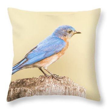 Bluebird On Fence Post Throw Pillow by Robert Frederick