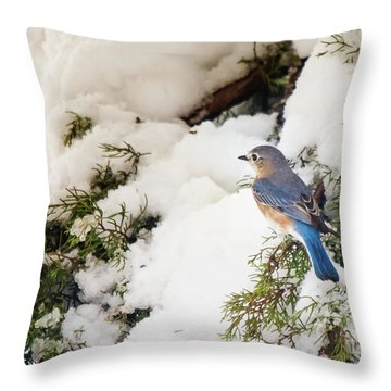 Bluebird On Snow-laden Cedar Throw Pillow by Robert Frederick