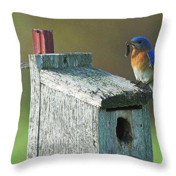 Throw Pillow featuring the photograph Bluebird by Steve Stuller