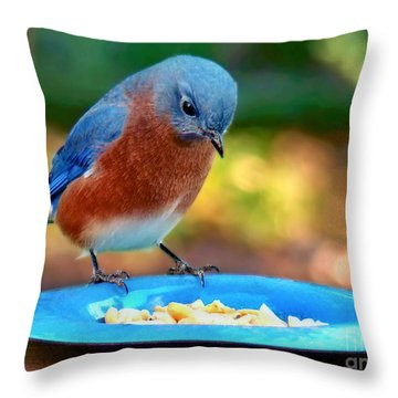 Throw Pillow featuring the photograph Bluebird's Dinner by Sue Melvin