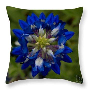 Bluebonnet Birdseye View Throw Pillow by John Roberts