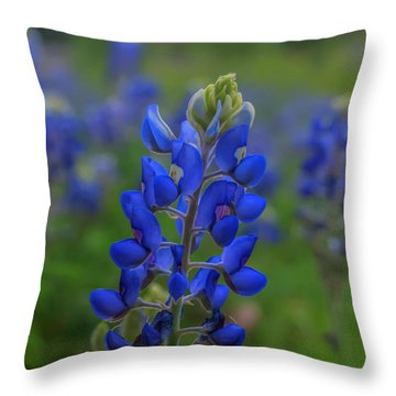 Bluebonnet Field Throw Pillow by Joshua House